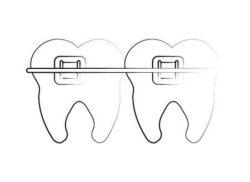 奥歯の役割
